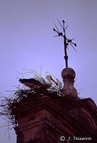 Cigüeña en campanario