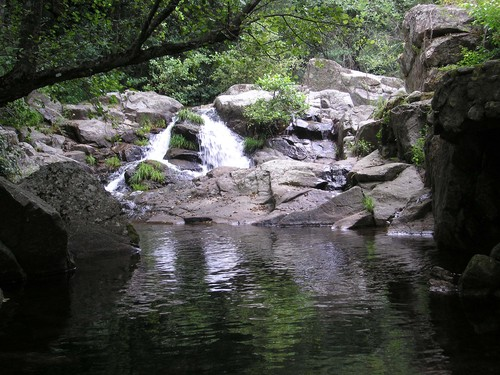 charco oscuro