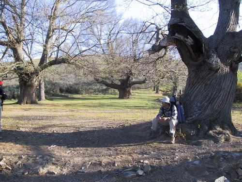 Camino Riego de Ambros une chataigneraie
