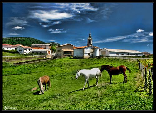 Caballos retozando (Valle de Harana)