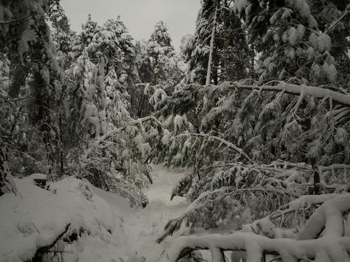 Nieve Demoledora