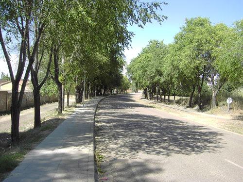 Paseo de los Olmos - Monzón de Campos (Palencia)