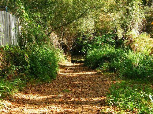 Manto de hojas en el sendero de Galaroza a Castaño
