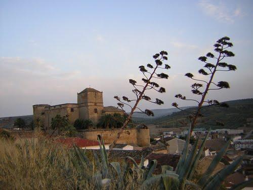 Vista castillo desde prado