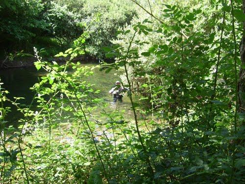 Pescando trucha