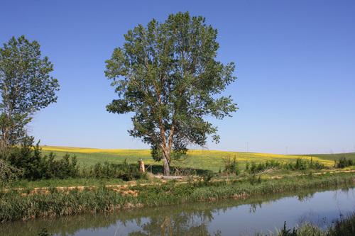 Sembrado (Canal De Castilla-Naveros De Pisuerga,Palencia)