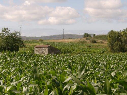 Muíño de Campolongo