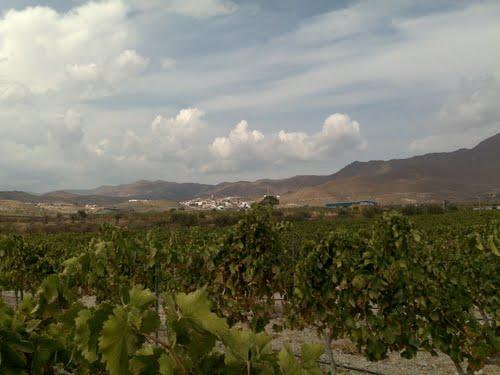 Uleila del Campo desde los viñedos