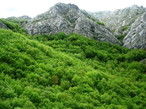 Verde sobre roca