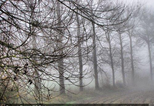 Mañana de niebla / Foggy morning