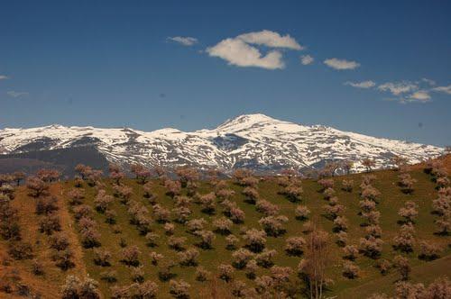 Mulhacen from Sierra de Contraviesa