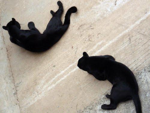 big cats in Cabarcenos