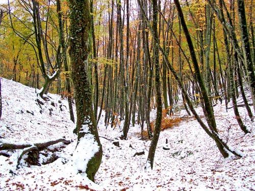 hayedo en otoño nevado