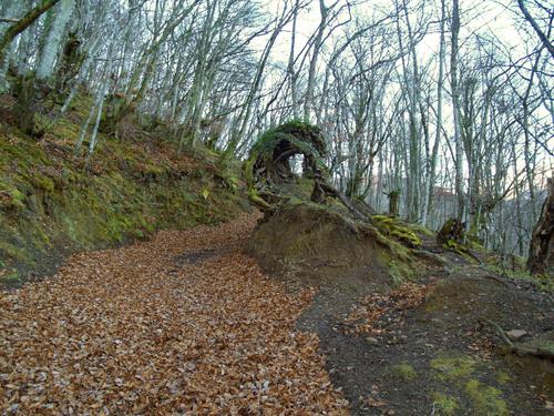 Subisa a Pico  Ferreirua, 1980 metros, Teverga ( Asturias)