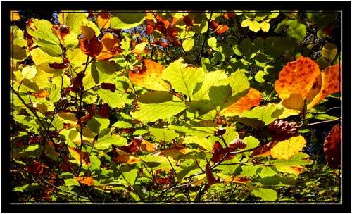 Contraluz de otoño - Selva de Irati - Navarra - España - Spain