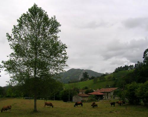prado con vacas, Venta el Pobre, Llanes, 2008.