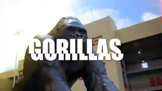#BeAGorilla - Pittsburg State University