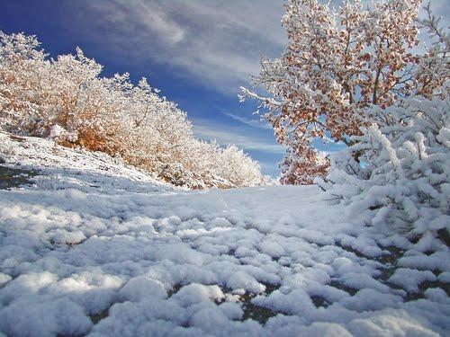 Sendero nevado