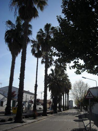 Avenida con palmeras en Alcazaba. En bici desde Talavera, abril de 2010