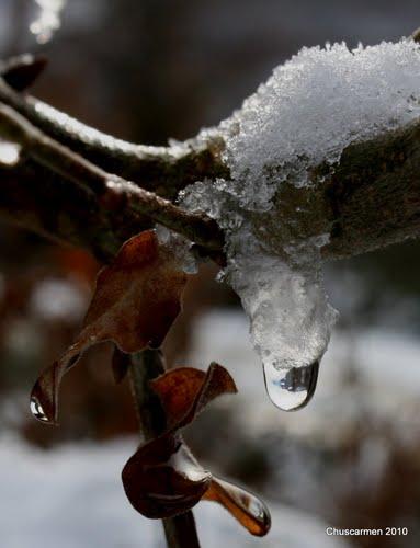 Gota de nieve para Luis