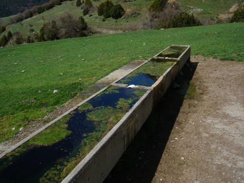 Bassiol al costat de la Font del Freixe