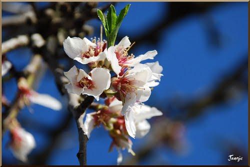 Primavera (31-3-2010)