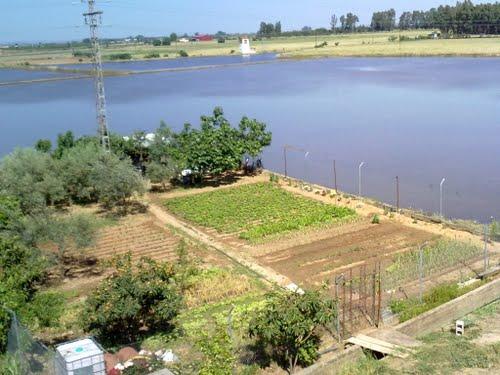 Huertos en medio de una zona inundable para cultivo. Mayo de 2010