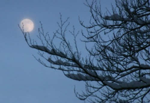 The moon leans on a snowed branch