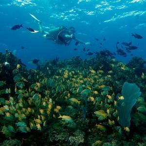 cardumen de peces cancun