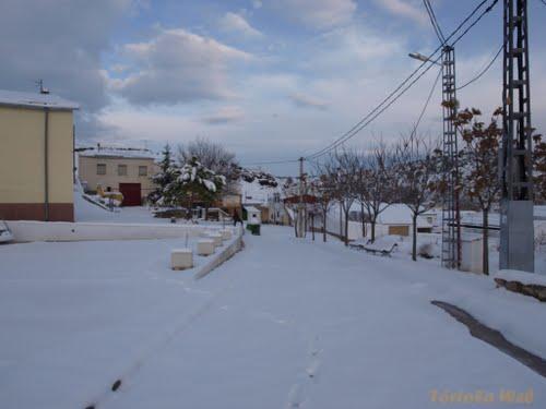 Tórtola Nevado 11