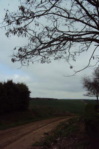 Camino despues de la lluvia