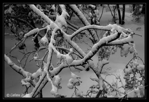 Escorca nevat 2010 - http://cafate.blogspot.com/