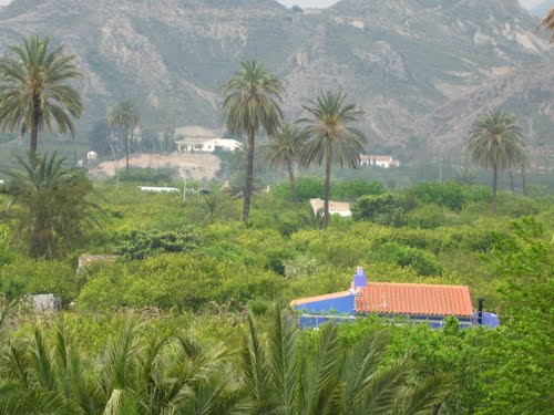 Garden of the palms.