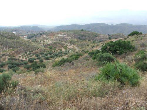 Serena to Albarico road