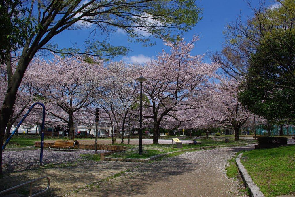 japan Local park