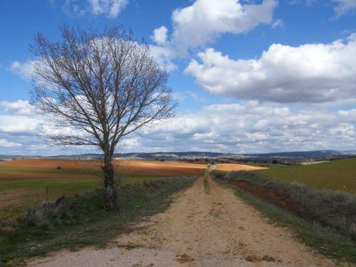 Árbol solitario en el campo de Cuenca cerca Navalón