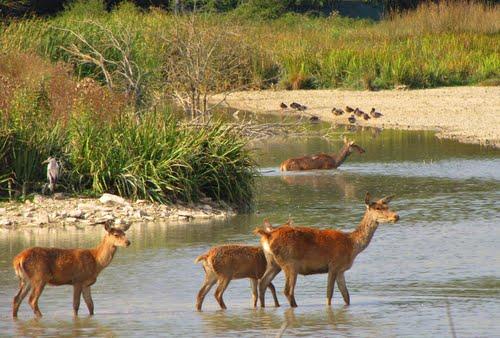 Una imagen dentro de los humedales naturales de Salburua -  An image within the natural wetlands of Salurua (Vitoria- Gasteiz) Para Hilario  (N-Lorito)