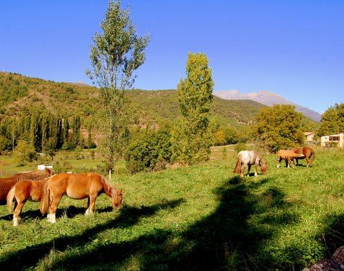Cavalls, la Pobleta de Bellvehí, Vall Fosca, Lleida