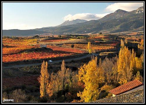 Colores de otoño en Navaridas (Rioja Alavesa)