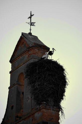 Por San Blas... la Cigüeña Verás (Iglesia de Cogorderos)
