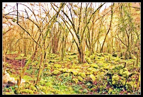 Bosque de Borleña