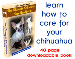 chihuahua health care book
