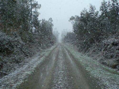 neve no bosque