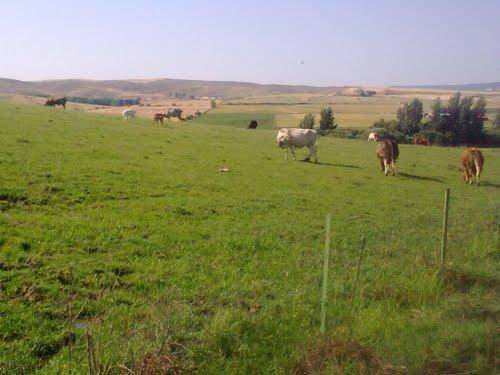 Pastando en la fresca hierba
