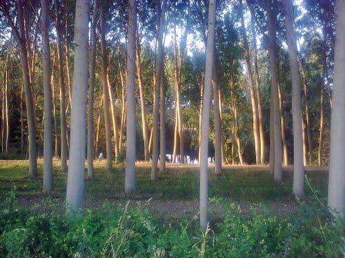 Bosque en Aldehuela del Jerte