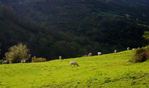 Pastures solejades