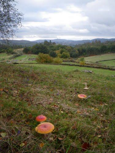 Prados y bosque entrando el otoño