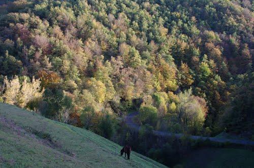 Outono no Caurel