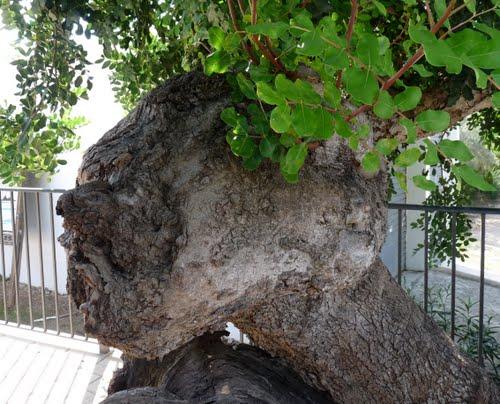 Riesenholzkopf