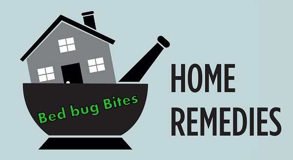 how to kill bed bugs yourself naturally home remedies step